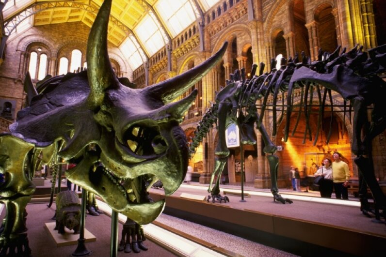 You've heard all about the dinosaurs. Why not meet some animals that scurried, hopped and cruised through the Cretaceous? © Bill Varie/Corbis
