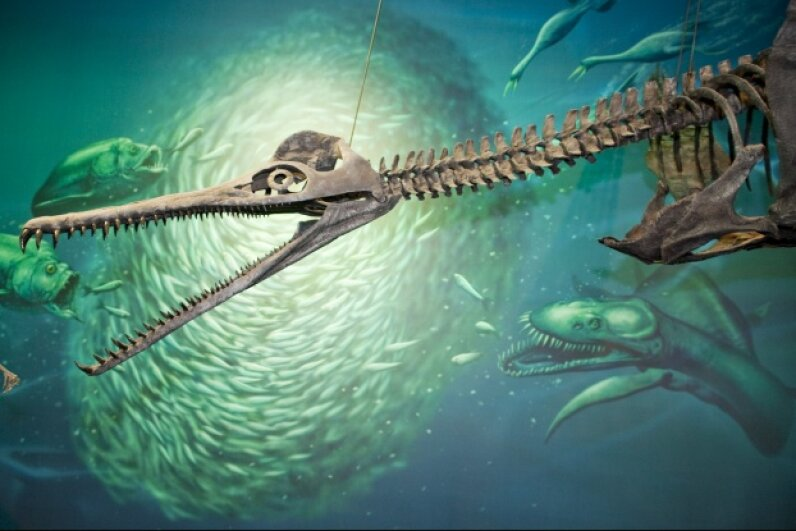 The Dolichorhynchops bonneri plesiosaur hangs with some of his marine brethren at Pittsburgh's Carnegie Museum. It didn't survive, but the sea turtle did. © Richard T. Nowitz/Corbis