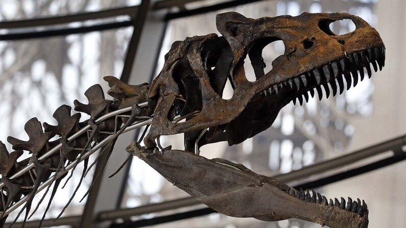 dinosaur, skeleton