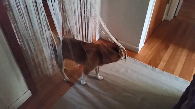 dog trancing