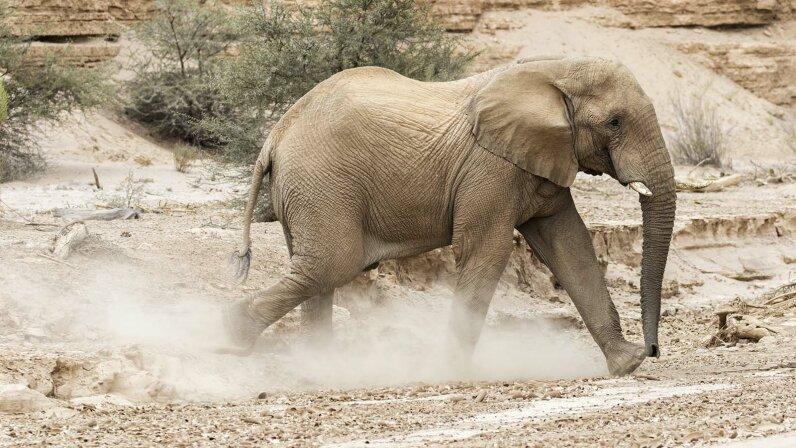 elephant, bee