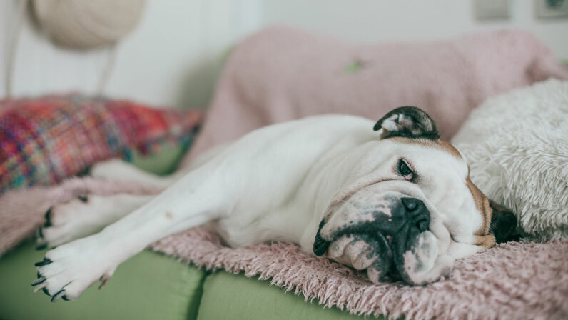 dog looking bored