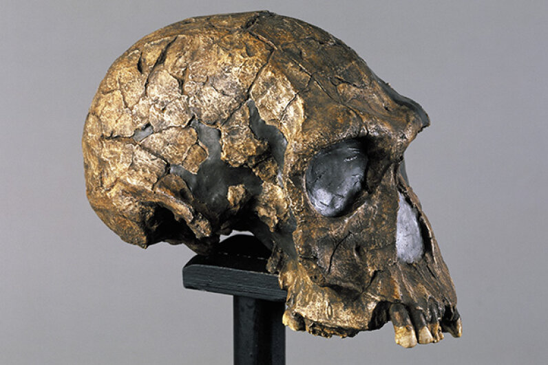 "The name Homo habilis comes from this species's nickname: ""handy man."" C. Ciglioni/DeAgostini/Getty Images"