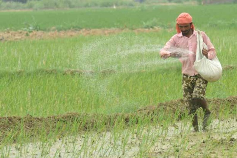An Indian farmer throws fertilizer in a paddy field in 2012. NARINDER NANU/AFP/GettyImages