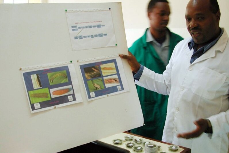 Dr. Stephen Mugo shows pictures of the stem borer, a pest that destroys entire corn harvests in Kenya. Mugo is one of many African scientists experimenting with bio-engineered food in order to grow heartier crops that will reduce hunger and malnutrition. Sudarsan Raghavan/MCT/MCT via Getty Images