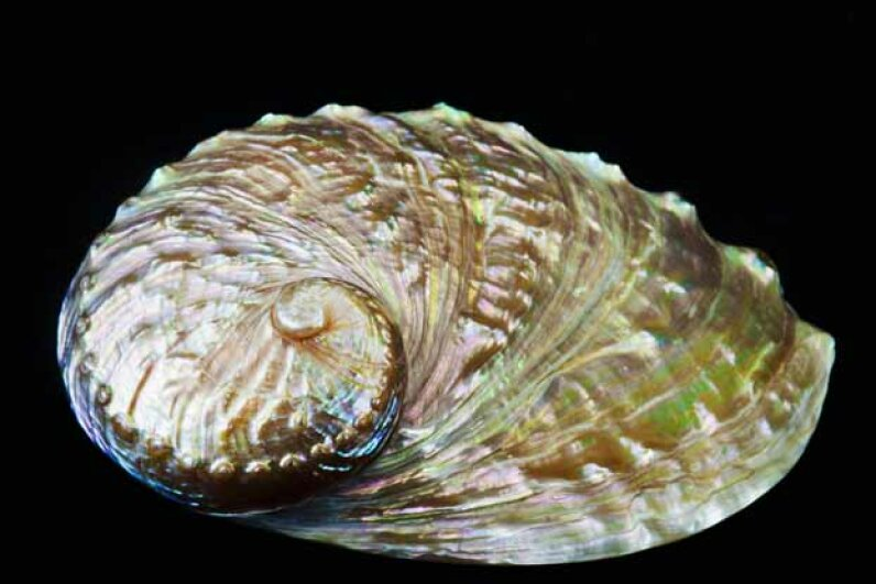 The hard shell of the abalone inspired MIT researchers to isolate the enzyme abalone use to mineralize C02 in order to build their shells. One day, we might be able to make carbon bricks from C02. Bill Brennan/Perspectives/Getty Images