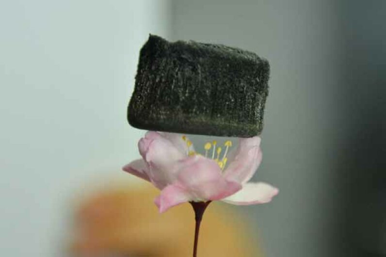A carbon sponge made of aerogel rests on this cherry blossom. While it is lighter than helium, it can absorb oil 250-900 times its own mass. © Imaginechina/Corbis