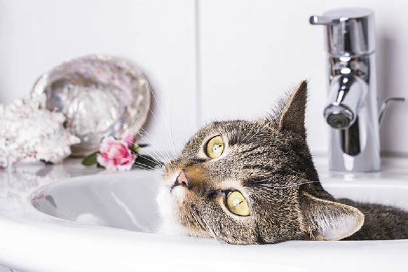 A drink of water from the tap will help your dehydration, but it won't lessen your hangover. Burkhardt-Mayer-Fotografie GbR/iStock/Thinkstock