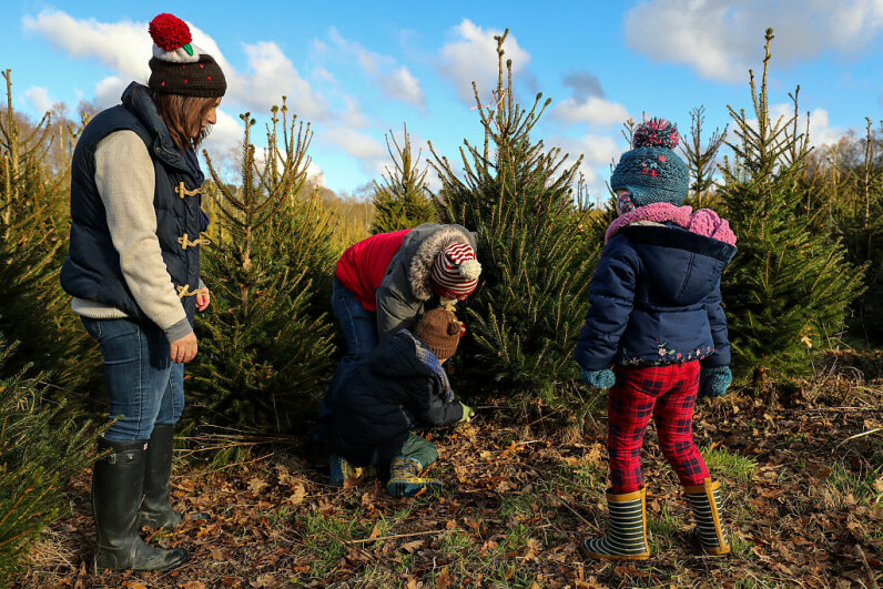 Wylds Farm in Hampshire, England, allows members of the public to choose and cut their own Christmas trees, just like this family is doing. Andrew Matthews/PA Images via Getty Images