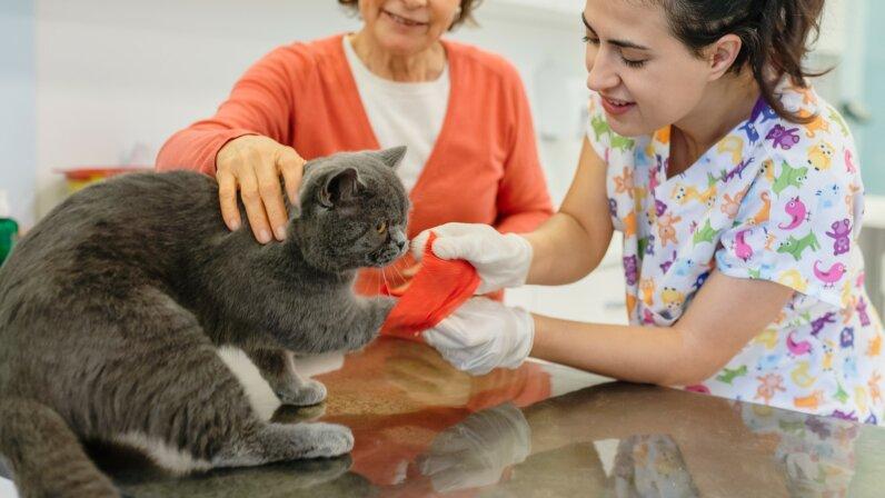 cat injured