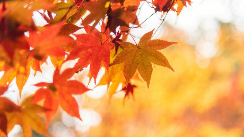 closeup of autumn leaves
