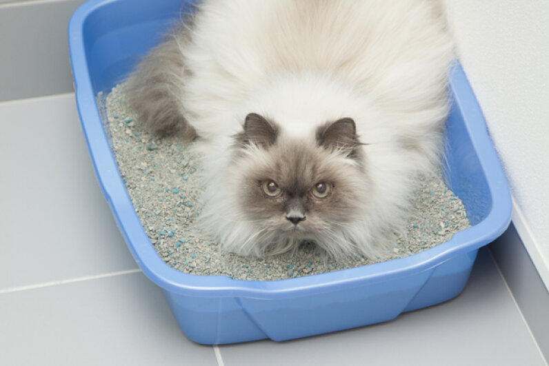 Why do some cats love their litter box and others hate it? See more cat pictures. © Vstock LLC/Tetra Images/Corbis