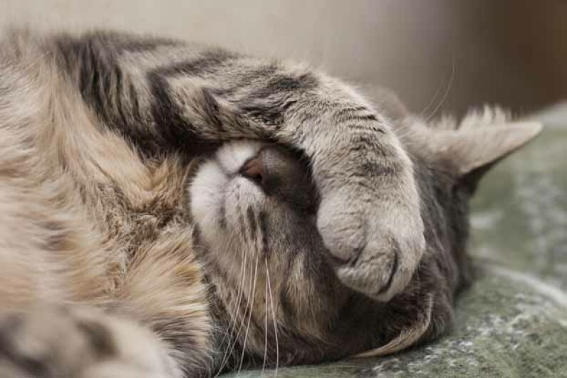 Some feline illnesses will make Kitty go anywhere -- not just in the litter box. екатерина максименко/iStock/Thinkstock