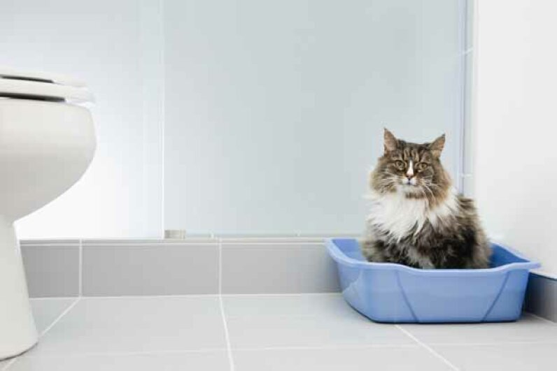 Maybe Kitty doesn't want to share her bathoom space with you! © Vstock LLC/Tetra Images/Corbis