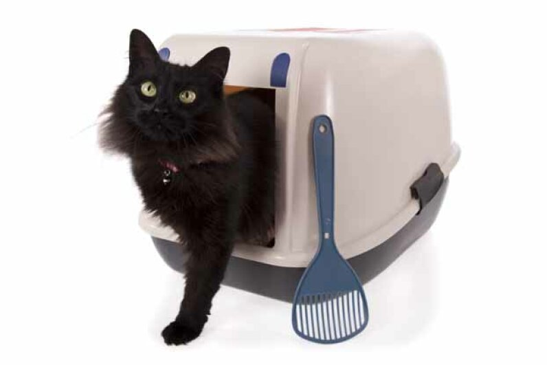 Some cats like the cosiness of a covered litter box. However, they trap odors inside, so be vigilant about cleanup. Lusoimages/iStock/Thinkstock