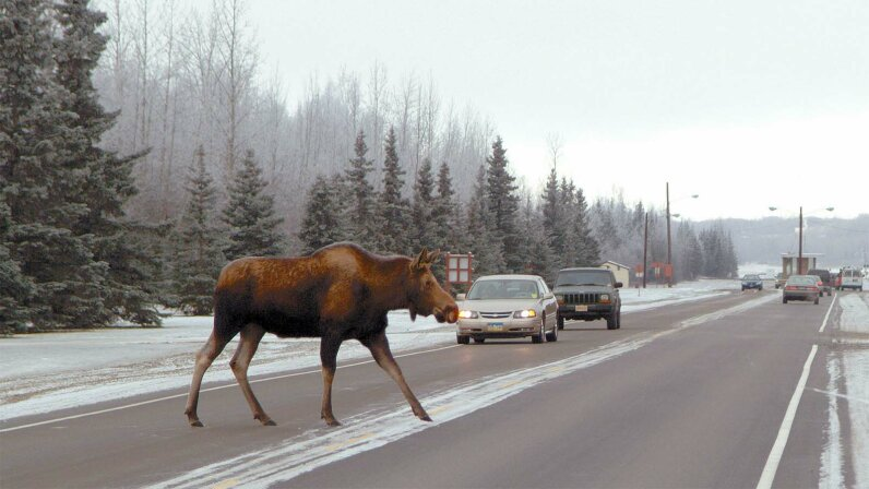 moose, test