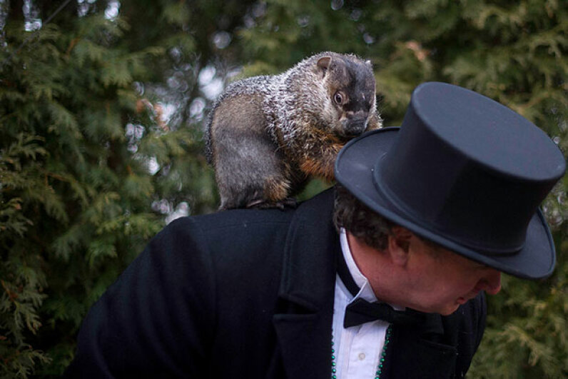 Groundhog handler Ron Ploucha holds Punxsutawney Phil after he saw his shadow predicting six more weeks of winter on Feb. 2, 2012. Jimmy the Groundhog handles the same duties in Sun Prairie, Wisconsin and bit the town's mayor in 2015. Jeff Swensen/Getty Images