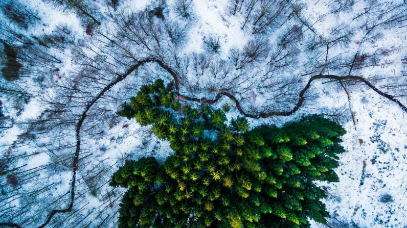 An image of Denmark's Kalbyris Forest took first place in the Nature category in this year's contest. Michael Bernholdt