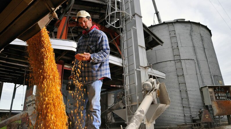 In 2016, U.S. farmers' yielded a total of 86.7 million acres of corn valued at $51.5 billion. Tom Sperduto/Aurora/Getty Images