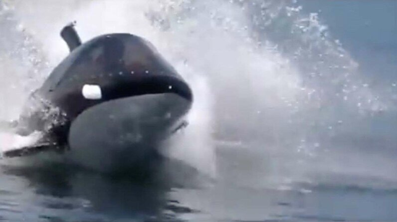 There's a two-person watercraft that looks like an orca — really. Hammacher Schlemmer YouTube video