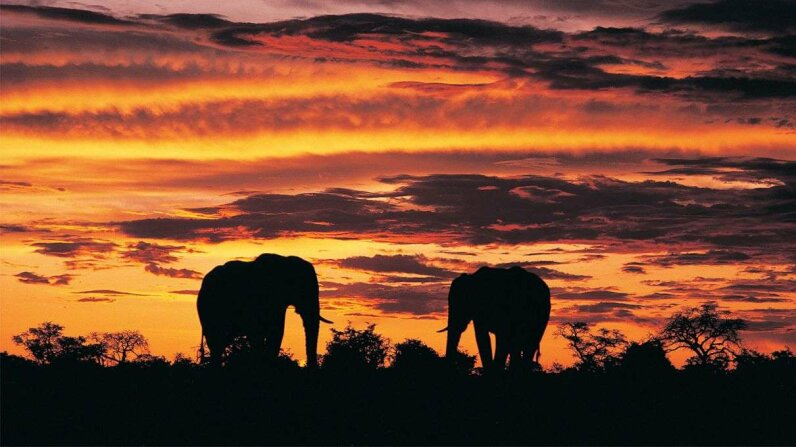 African Elephants Are in Trouble, New Census Finds Photodisc/Thinkstock