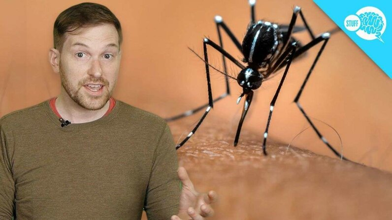 BrainStuff: Are Some People Immune to Mosquitoes? HowStuffWorks