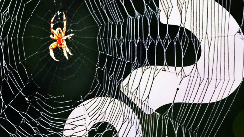 Spiders May Go Extinct From Oversharing HowStuffWorks NOW