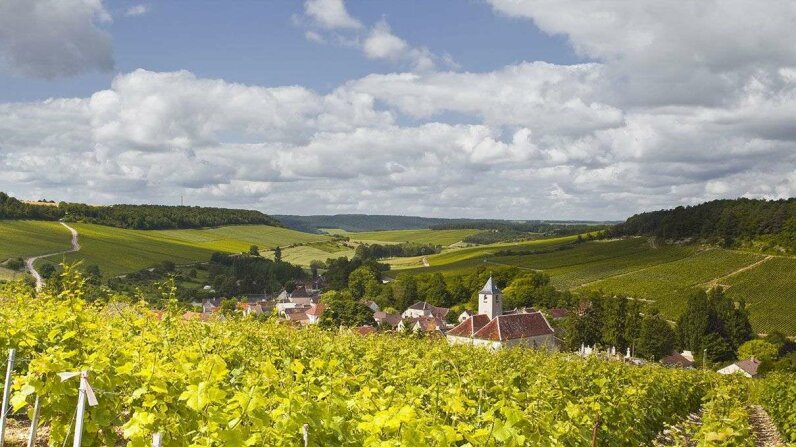 The sun shines on vineyards above the village of Viviers sur Artaut in the Champagne region of France. Could global warming impact the types of grapes grown there? Julian Elliott / robertharding/Getty Images