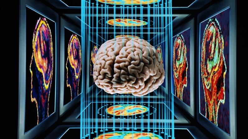 Researchers have made advances in manipulating mammalian memories. Barry Blackman/Getty Images