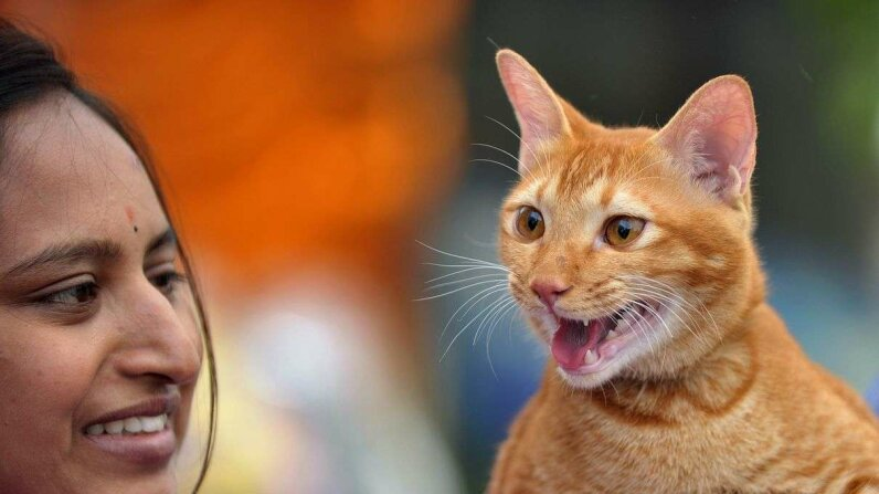 Estimating the Number of Cats in the World