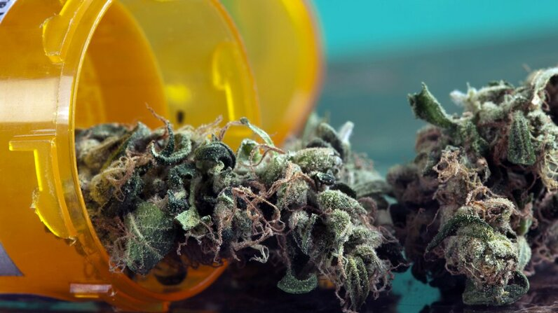A new study found that THC in marijuana appears to have actually altered the structure of the brains' of older mice, making them more like the brains of younger mice. belterz/Getty