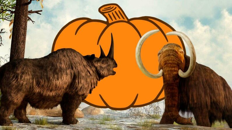 The extinction of Pleistocene megafauna like this woolly mammoth and rhino contributed to the tasty evolution of pumpkins and squash we cultivate today. Stuart Dee/Daniel Eskridge/Stocktrek Images/CSA-Archive/Getty Images