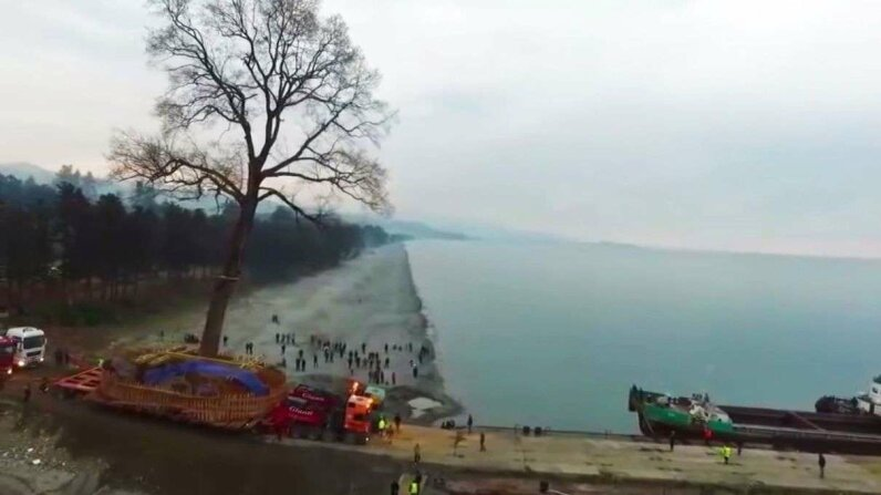 The 135-year-old tree was shipped across the Black Sea. OMG YouTube Channel