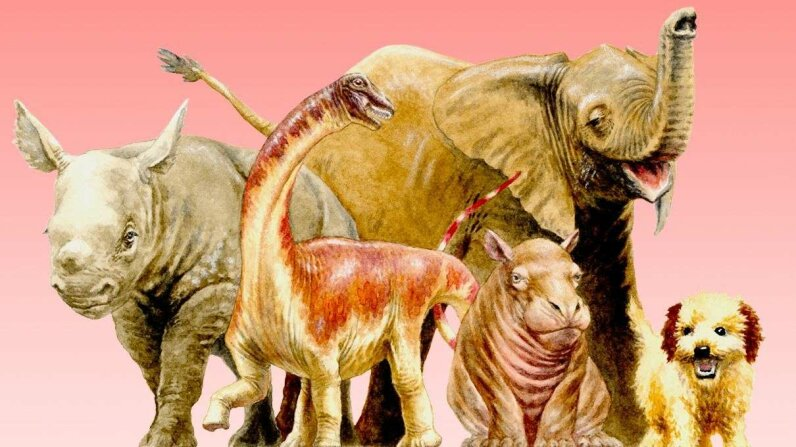 A hatchling Rapetosaurus as compared to newborn mammals. D. Vital