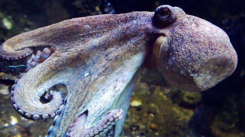 blood, octopus