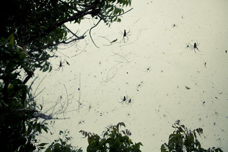 Spiders spin a giant web by a tree. Aurore Martignoni /EyeEm/Getty Images