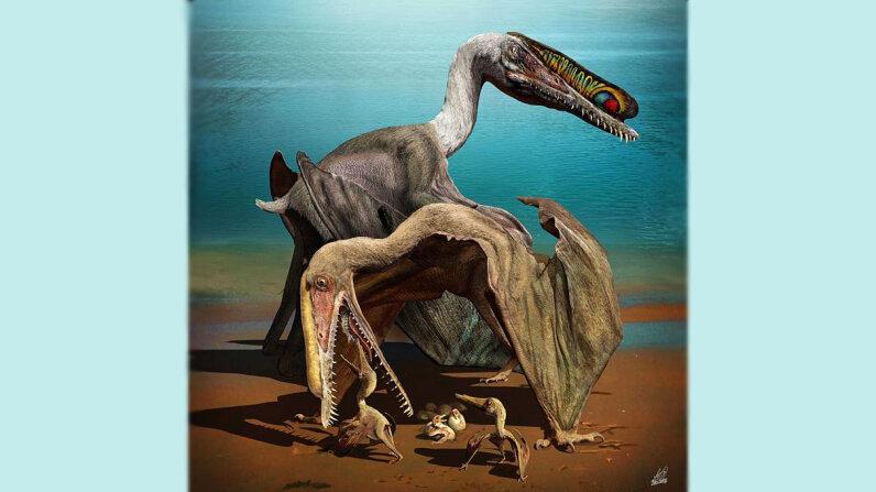 pterosaur egg