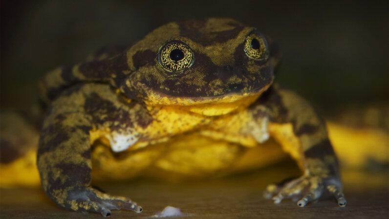 Romeo, frog