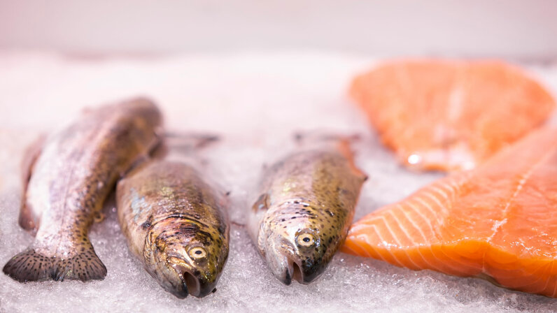 Scientists have discovered why farm-raised salmon are so much more likely to be deaf than wild salmon. MAIKA 777/Getty Images