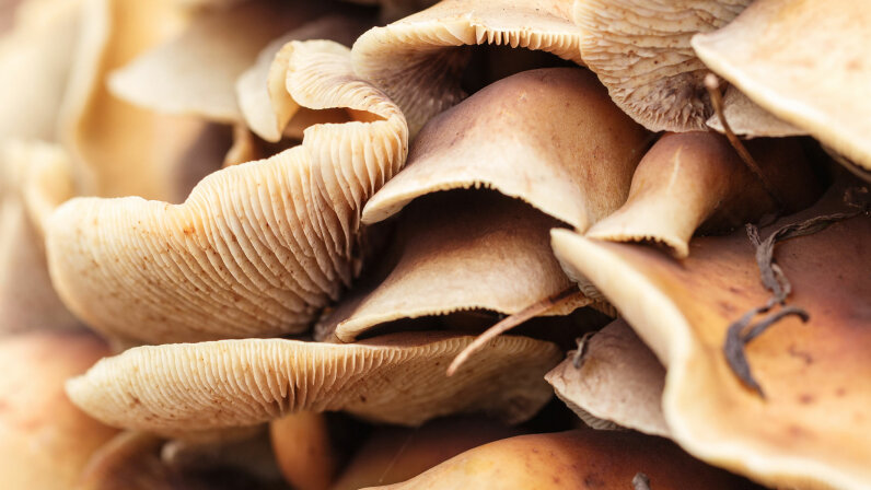 A study shows that psilocybin (the drug in magic mushrooms) provides relief for severely depressed people. TorriPhoto/Getty Images