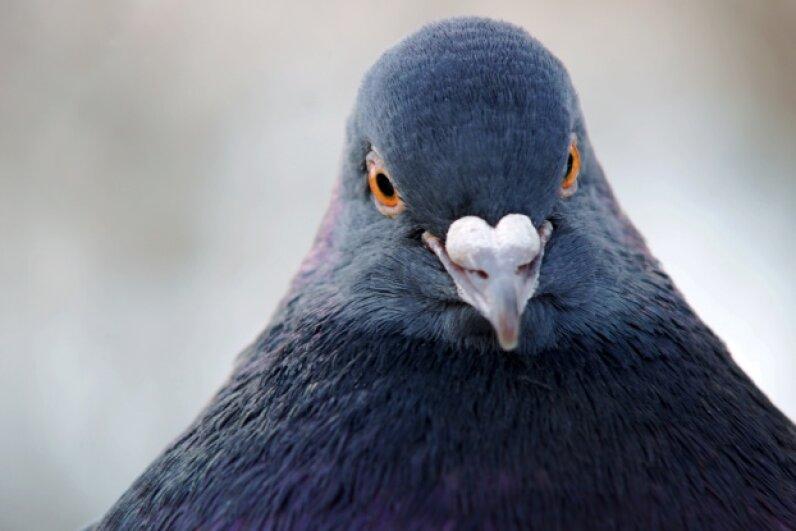 """""""Who are you calling birdbrain?"""" Grzegorz Kordus/iStock/Thinkstock"""
