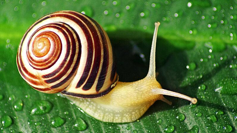 snail on leaf