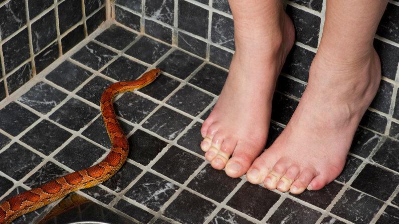 snake in drain