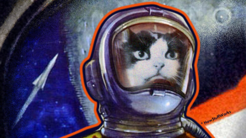 Felicette the space cat
