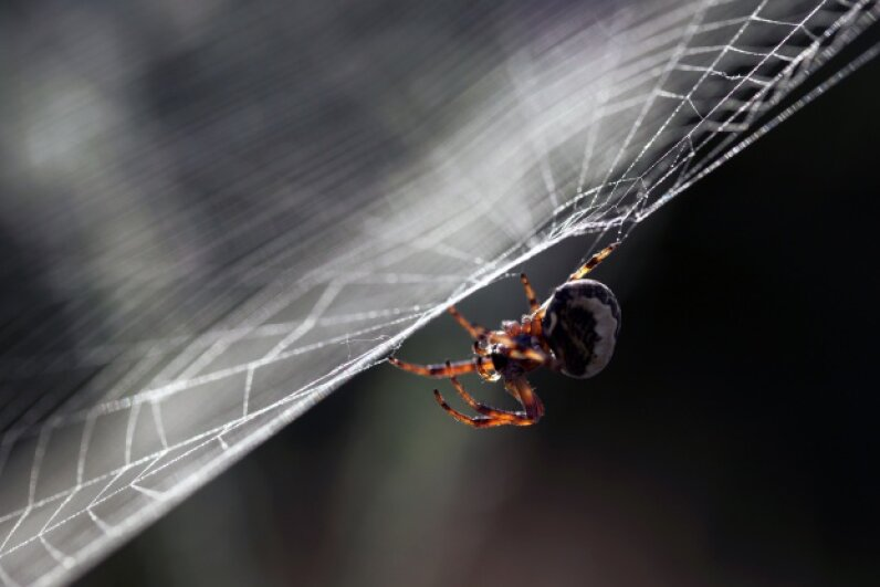Spiders are known for their webs, but not all of the little guys are gifted web 'designers.' ESezer/Thinkstock