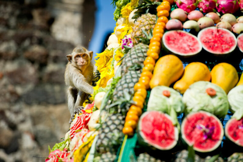Lopburi's long-tailed macaques are treated to an elaborate feast during the annual Monkey Buffet. See more vacation pictures. © Natthawat Wongrat/Corbis