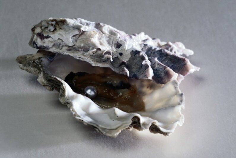 Not entirely sure how oysters form? Neither were early natural philosophers who thought, under the guise of spontaneous generation, that the seafloor could just spawn them. Spike Mafford/Photodisc/Thinkstock