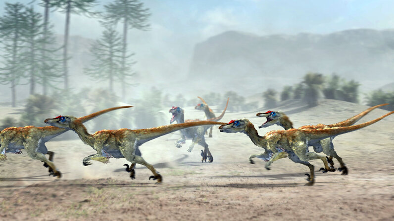 velociraptors hunting in pack
