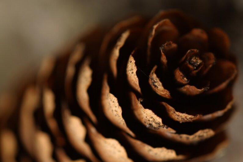 An open or closed pine cone actually can tell you what's happening with the weather. Jupiter Images/Photos.com/Thinkstock