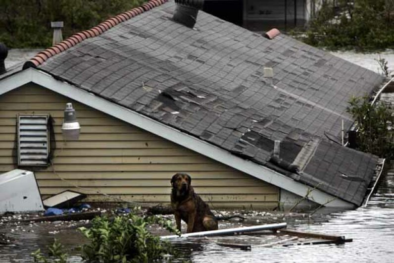 dog, hurricane katrina